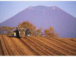 ペンション コットンファーム:実りの秋です。羊蹄山を背にトラクターが忙しそうです。