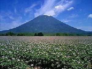 ペンション コットンファーム:ジャガイモ畑が広がります。
