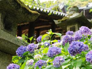 THE KASHIHARA(ザ 橿原)