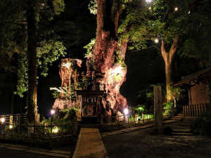 【来宮神社】夕暮れから23時頃までライトアップされます。当館から徒歩3分。