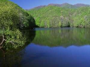 ペンション サッチモ:ペンション近く 7月には蛍もみられる 曲沢沼の芽吹き