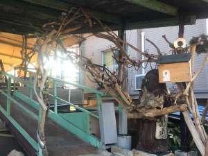 海宿(umiyado)OHANAの写真