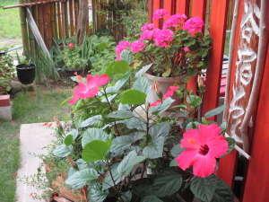西の谷宿 藏:施設の玄関前 暖かい南房総では一年中綺麗なお花が咲いています!