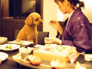 愛犬と泊まれるスタイリッシュ宿。D+KIRISHIMA