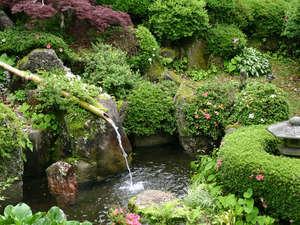 湯屋温泉 炭酸泉の温泉旅館 ニコニコ荘:眩しい緑、季節ごとに咲く花々や山野草を楽しめる庭園