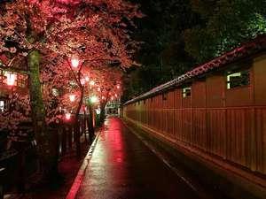 当館の庭園に面した木屋町通り沿いの桜並木 一部客室からもご覧いただけます(開花状況はお問合せ下さい)