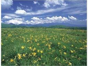 霧ケ峰、八島湿原一帯はニッコウキスゲの群生地