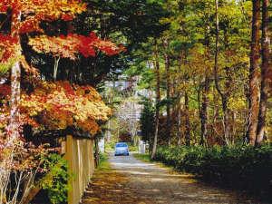 からっと乾いた涼しい空気は心地よい秋風を運んでくれる。鮮やかに色づく秋の群馬へお出掛け下さい。