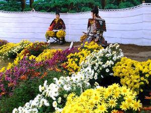 【秋】横手市の秋を彩る『横手菊まつり』毎年10月下旬から11月上旬にかけて開催。