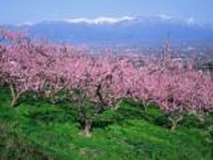 周辺ではピンクの桃の花見が楽しめる