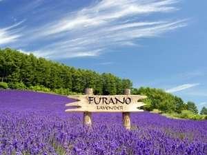 FURANO NATULUX HOTEL:ワインハウスのラベンダー畑 夜にはライトアップされます