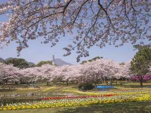 【別府公園】白菊から徒歩1分 日本最古のクリスマスツリー「チッカマウガツリー」があります。
