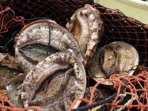 漁師料理と温泉の宿 浜栄:相差のあわび、分厚くて、とっても甘くて美味しい。