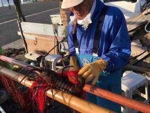 漁師料理と温泉の宿 浜栄:伊勢海老網漁風景