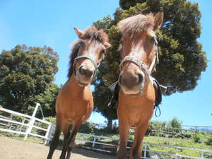 高室山温泉 パノラマホテル(旧:小さなサンタフェまきばの宿):温厚で愛嬌たっぷりの馬たちと間近に触れ合って。