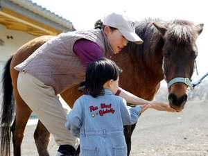 高室山温泉 パノラマホテル(旧:小さなサンタフェまきばの宿):併設の牧場では小柄で温厚な与那国馬と是非間近に触れ合ってみて♪