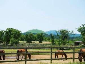 高室山温泉 パノラマホテル(旧:小さなサンタフェまきばの宿):ホテルの目の前に広がる広大な牧場では沖縄・与那国島の天然記念物、与那国馬が伸び伸びと暮らしています。