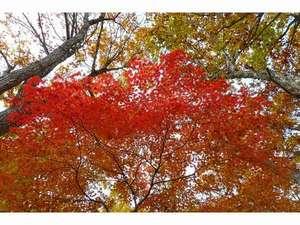 のよさの里 牧之の宿:秋山郷の紅葉