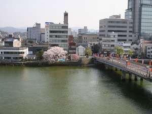 桜の木が咲きました。この桜の木には大橋を建設したときのある逸話が・・・
