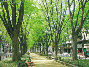 ホテル定禅寺:仙台のシンボル定禅寺通りに面しています。夏は七夕パレード・冬は光のページェントでにぎわいます。