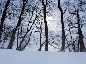 ザ レイクビュー TOYA 乃の風リゾート :【冬】真っ白な雪原となる洞爺湖畔。高くそびえる木々も冬眠を迎える。