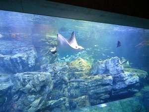 約90種類 1500尾の自然の魚たちが泳ぐ大回遊水槽