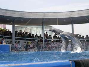 海の人気者イルカのパフォーマンス(イメージ)