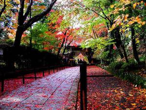 金波樓:紅葉の参道