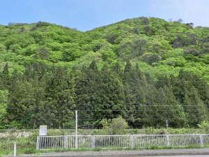 民宿旅館 二宮荘:新緑の綺麗な季節がやってきました♪