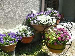 ペンションシロギス:小さいけれど、きれいなお花がいっぱい