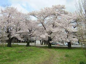 桜と花ももを合わせて満喫できる乙和公園。隣接する飯坂支所では図書館や多目的ホールも利用可能。