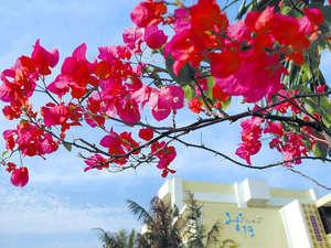 ホテル 花と緑のみずほ石垣島:*青空に映える美しいコントラスト