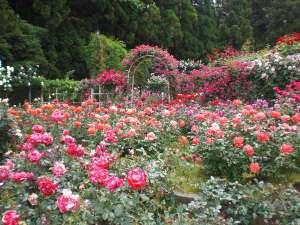 <霊山寺>奈良市中町。ホテルより車で約30分。約200種2000株のバラ園が有名。