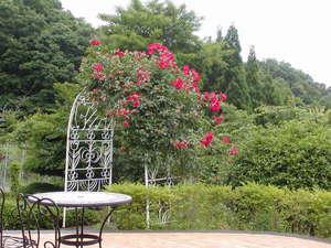 レストラン&スモールイン カッセル:薔薇のアーチ