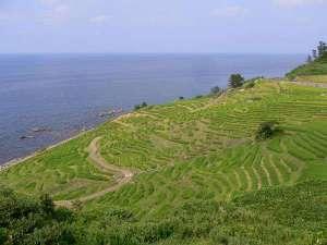 白米千枚田の風景