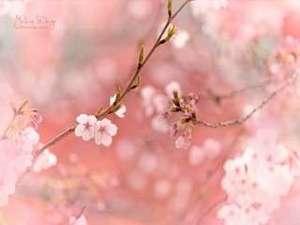 温泉名水の里 旅館 紀の国屋甚八(天川・洞川温泉):桜(和合幸恵作)