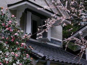 【春】 中庭散策にて『中庭の蔵と梅の花』もお楽しみ頂けます