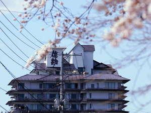 【春】仙台の桜は 『4月下旬』 が見頃です