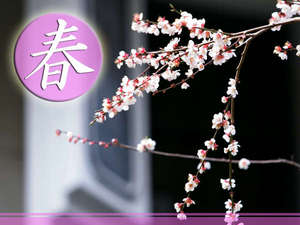 ◆佐勘の春◆~桜舞う~