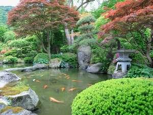 瀬見温泉 ゆめみの宿 観松館:日本庭園の池には、鯉が泳いでいます。
