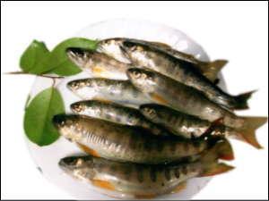 癒しの里小又川バンガロー:前の川で釣れる魚(山女:ヤマメ)