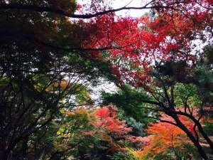 アパホテル<新宿御苑前>:紅葉が広がる新宿御苑
