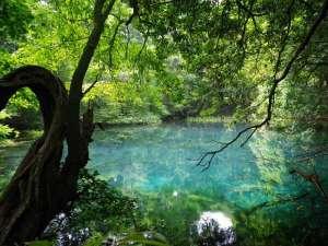 鳥海温泉 遊楽里:宿からお車で約5分の丸池様