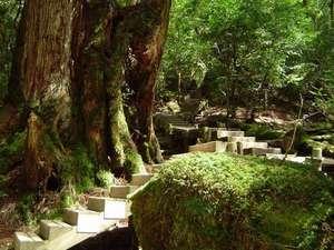 屋久島【全棟ハンモック付】コテージ 森のこかげ:深緑の階段
