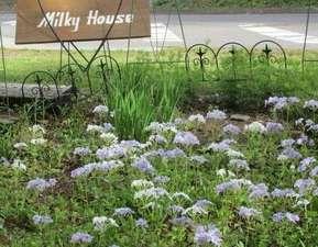 ペンション ミルキーハウス:山野草の前庭