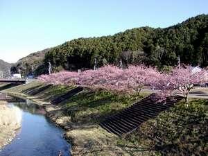 ライトハウス:南の桜と菜の花まつり(会場へは車で15分)