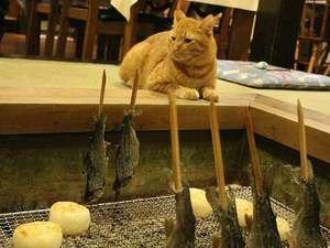 ペンション ひみつ基地:夕食にお出しする「ニジマスの塩焼き」「焼きオニギリ」と看板ネコのチャッピーくん