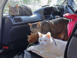 ペンション ひみつ基地:うちの看板ねこたちは、ドライブが大好き。みんなで九州に行ったときの一枚。