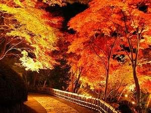 時之栖 伊豆温泉村 ホテルオリーブの木