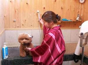 「いい湯だワン!」愛犬と別府の温泉を楽しむ♪ペット専用の温泉「わんこの湯」